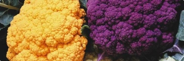 Цветная капуста для красоты и здоровья