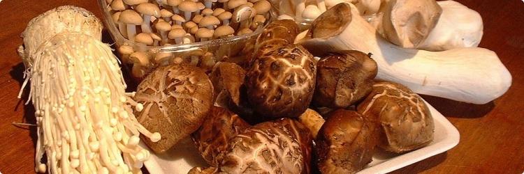 О грибах в народной медицине