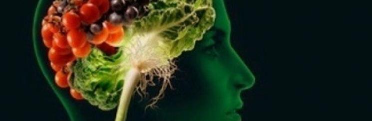 «Лакомства» для нашего мозга