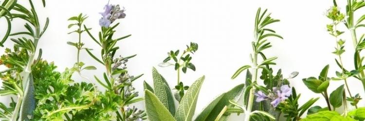 Лекарственные травы на страже здоровья малыша