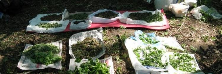 Как правильно хранить лечебные растения