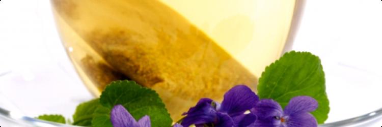 Фиалка как лекарственное растение при кашле у детей и взрослых