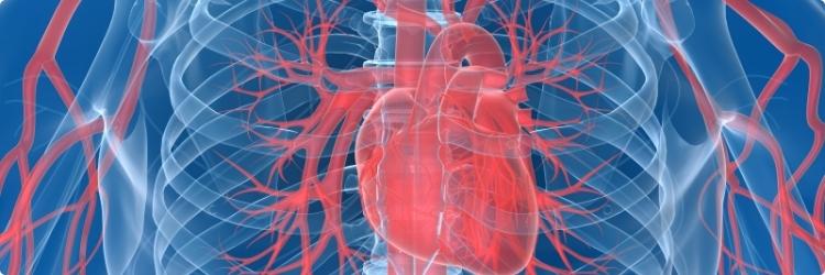 Как укрепить сердечно-сосудистую систему
