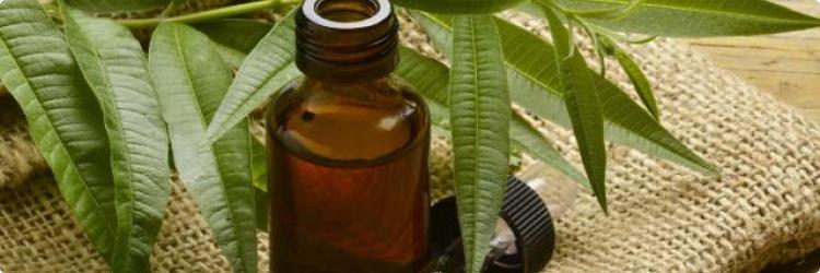 Масло чайного дерева и его биологическая активность