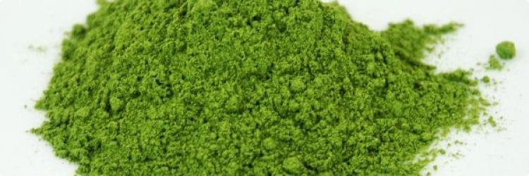 Молодой зеленый ячмень
