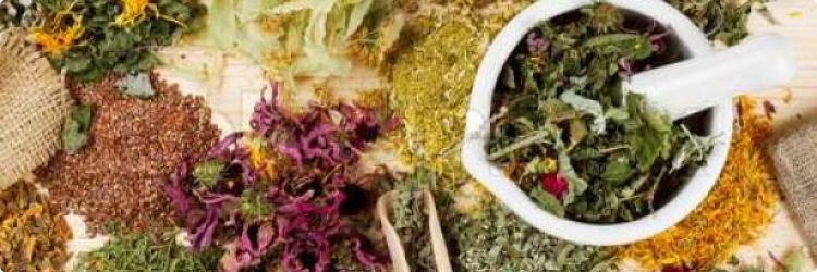 Полезные лечебные травы для весны
