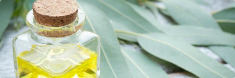Польза для здоровья эвкалиптового масла