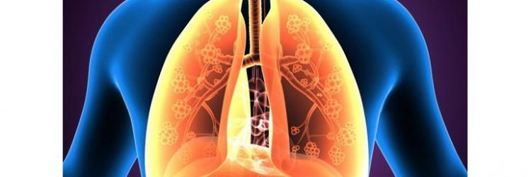 В чем причина бронхиальной астмы