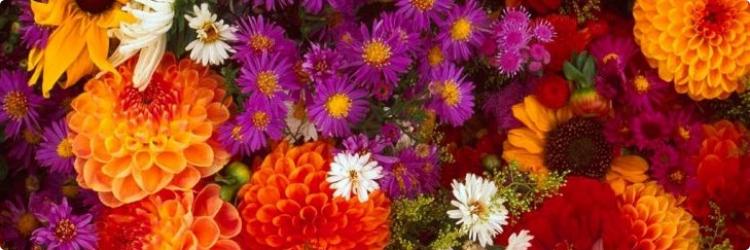 Цветы - их значение