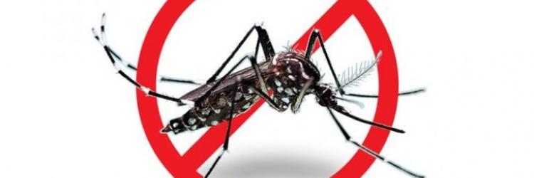 Как защитить себя от кровососущих насекомых