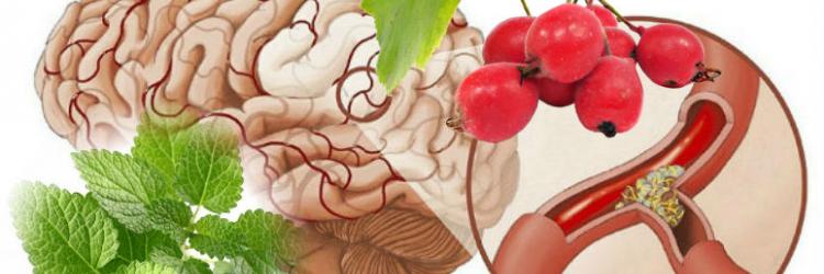 Лекарственные растения для сосудов