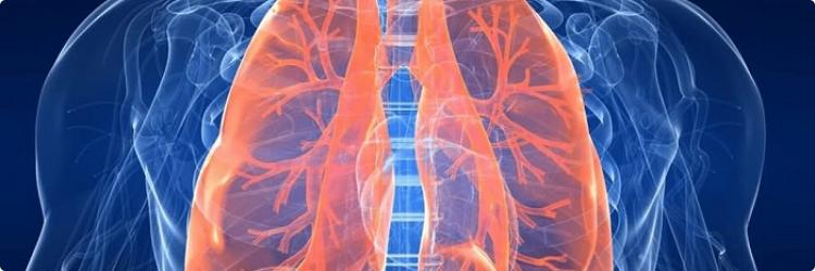 Пульмонология: диагностика и лечение заболеваний