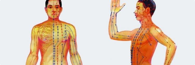 Соотношение между органами Инь и Ян