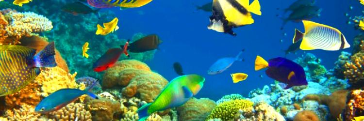 Для чего заводят рыбок в качестве домашних животных