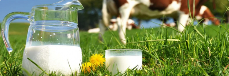 Основные питательные вещества в молоке