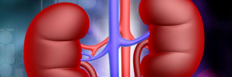 Хронический пиелонефрит: главные проблемы