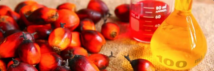 Пальмовое масло — польза и вред продукта
