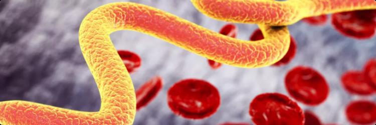 Способы и симптомы заражения паразитами