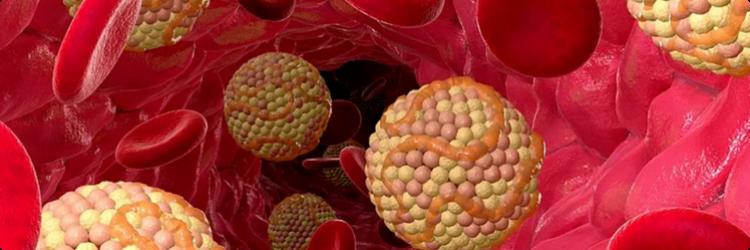 Стабилизация холестерина народными методами