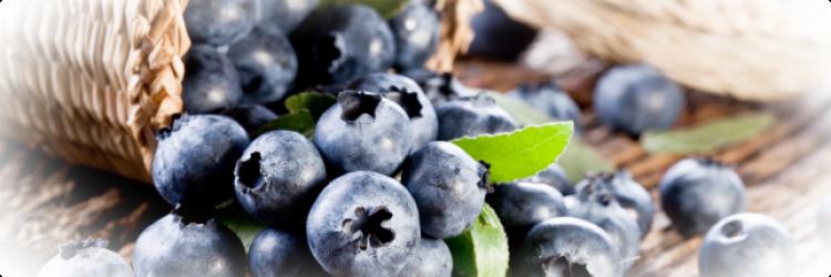 Черника - польза и риск, калорийность, пищевой состав