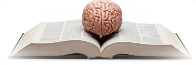Что происходит с мозгом при чтении книги?