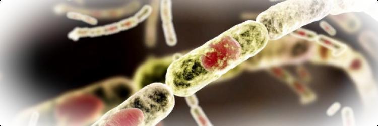Грибковые инфекции и их диагностика