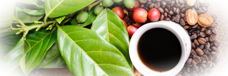 Как происходит отравление кофеином?