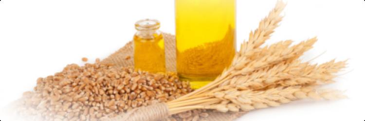 Масло из зародышей пшеницы и природная сила меда