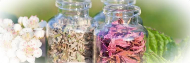 Мочегонные травы - эффективное и безопасное средство от отеков и других недугов