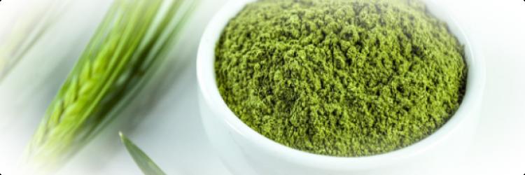 Молодой зеленый ячмень – что это такое и для чего он нужен?