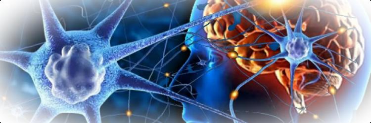 Нейропластичность: как заставить мозг лучше работать