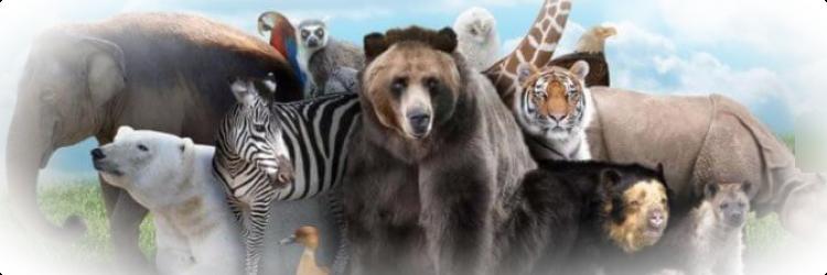 Поведение животных перед землетрясением