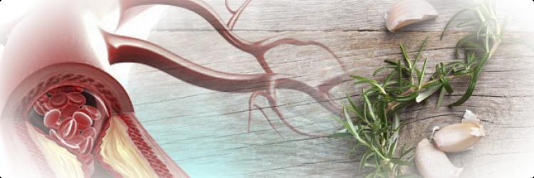 Травы и продукты, улучшающие кровообращение в организме