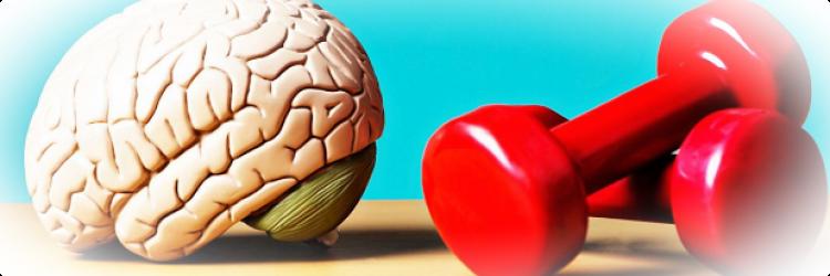Влияние упражнений на мозг