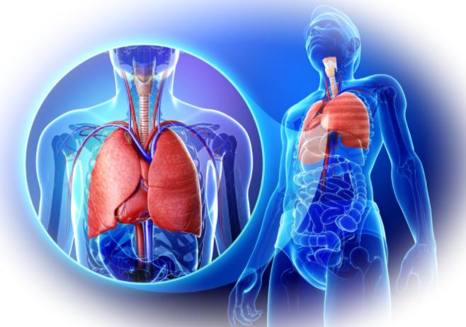 Зачем человеку нужен кислород и какое дыхание правильное