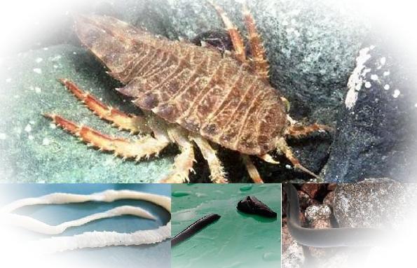 Виды и характеристика паразитов животного мира