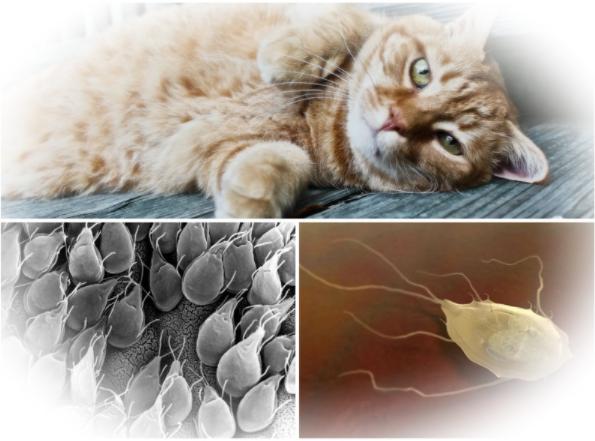 Виды кошачьих паразитов и их лечение