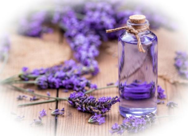 Эфирное масло лаванды - свойства и применение
