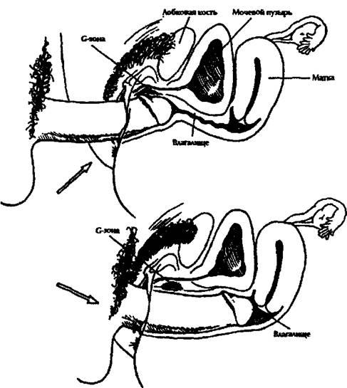 kak-dostavit-zhenshine-orgazm-zhenskaya-fiziologiya