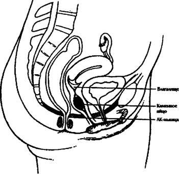 Симптомы простатита у мужчин боли и жжение в промежности