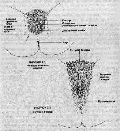 masturbatsiya-bugorok-veneri