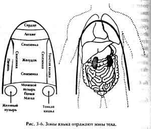 Ци Нэйцзан Массаж Внутренних Органов